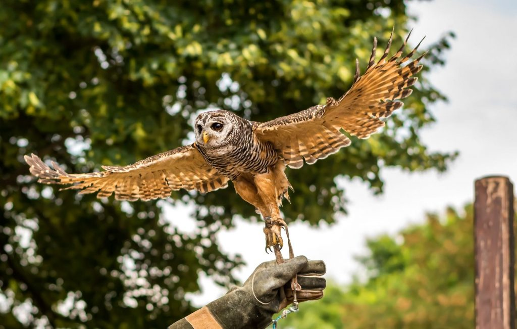 Things to do with kids - Eagles Flying Centre